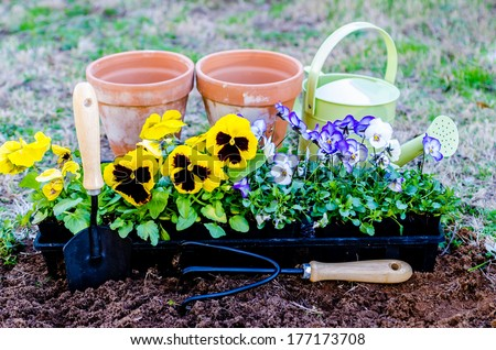 Spring fever.  Pots of violas and pansies with trowel, cultivator, and watering can on cultivated soil.   - stock photo