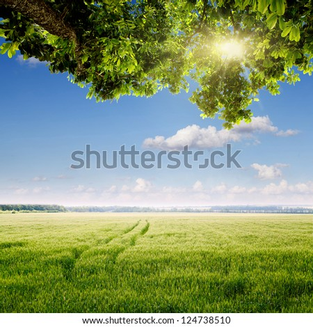 spring field and blue sky - stock photo