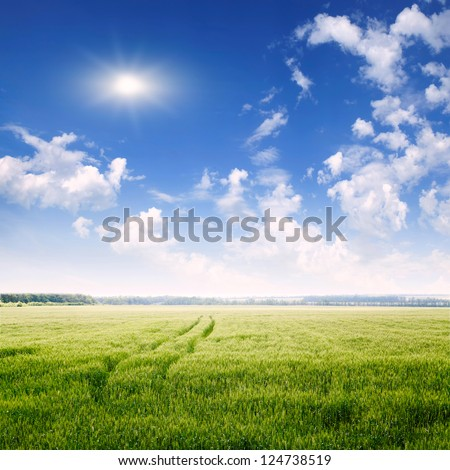 spring field and blue sky