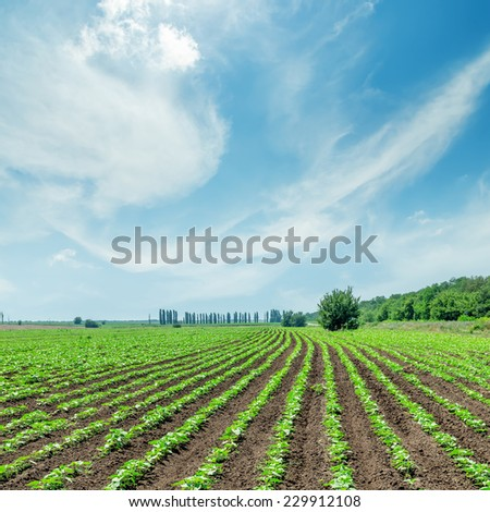 spring field and good sky with clouds - stock photo