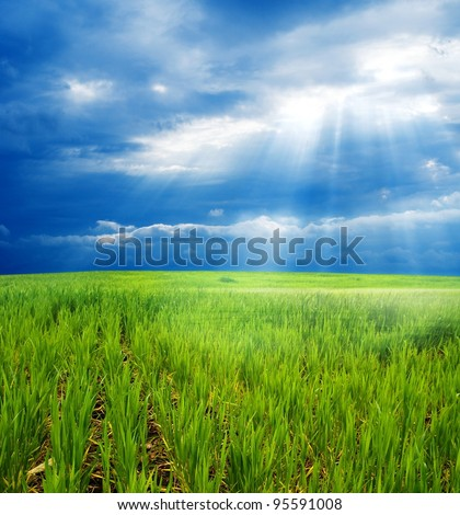 spring field in a rays of sun - stock photo