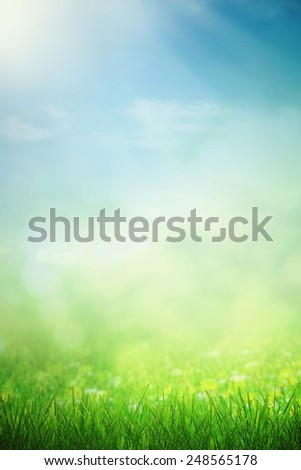 Spring field in sunlight and growing flowers - stock photo