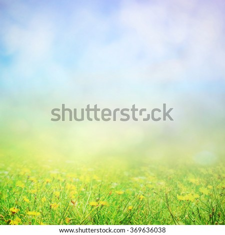 Spring field of yellow flowers in morning sunlight - stock photo