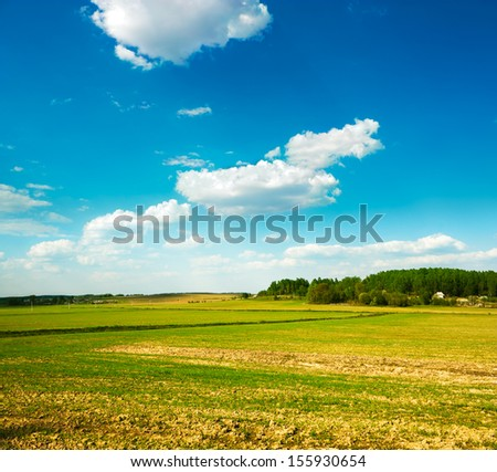 Spring Field on the Background of Beautiful Clouds and Blue Sky