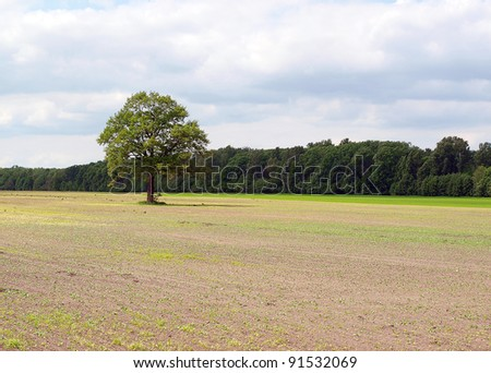 Spring field, the first green - stock photo