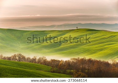 Spring field with billowing mists - stock photo