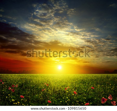 Spring field with poppies at sunset - stock photo