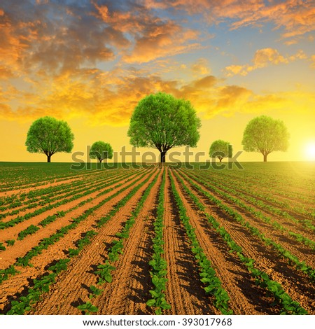 Spring field with trees at sunset. - stock photo