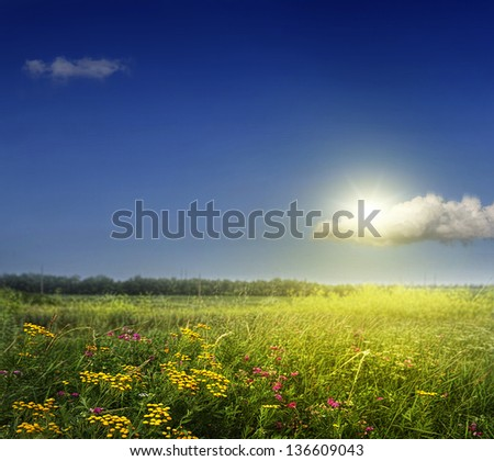 Spring field with wild flowers against the sky