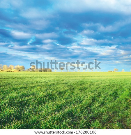 spring fields in countryside, first green shoots, landscape - stock photo