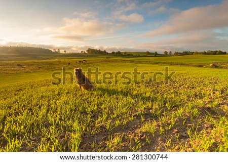 Spring fields with cows and dog - stock photo