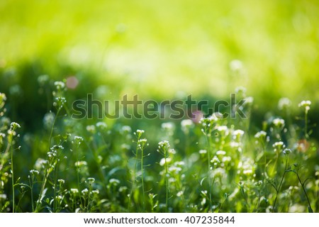 Spring floral background on a green meadow with warm sunflares, soft focus - stock photo