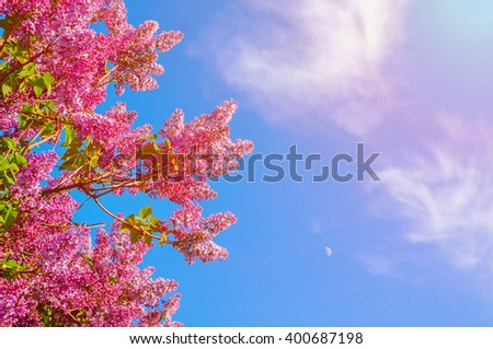 Spring floral background - purple blossoming lilacs flowers against blue sky lit by sunny light. Free space for text - stock photo
