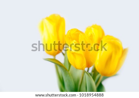 Spring floral background with tulip flowers. Holiday and seasonal design.