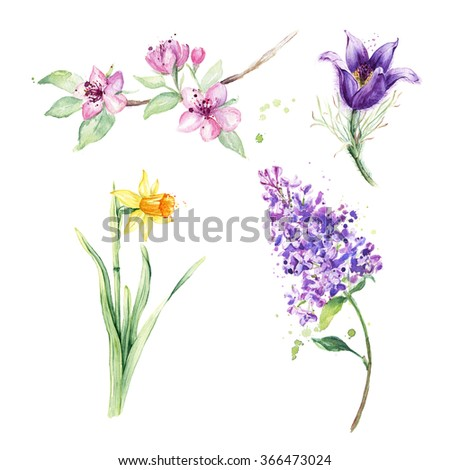 Spring floral set. Collection with spring flowers, drawing watercolor, anemone, narcissus, daffodil, lilac - stock photo