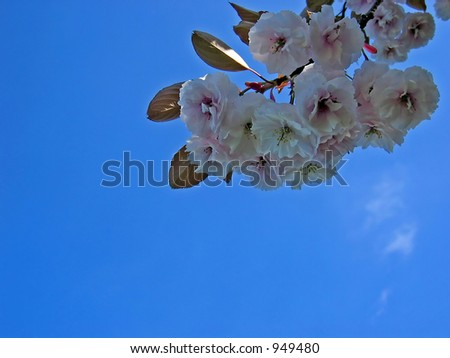 spring flower and blue sky