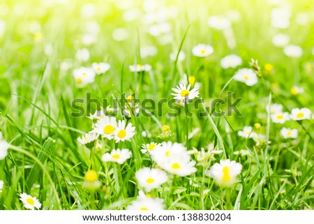 Spring flower background.