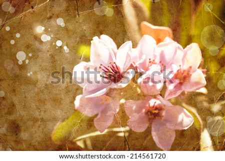 Spring Flower background with apple tree bloom, Beautiful pink flowers made with color filters, spring bloom, retro background - stock photo
