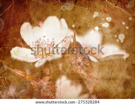 Spring Flower background with apple tree bloom, Beautiful white flowers made with color filters, spring bloom, retro background - stock photo