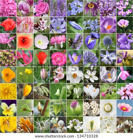 Spring flower collage - stock photo