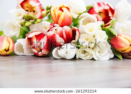 spring flower, colored tulip,  - stock photo