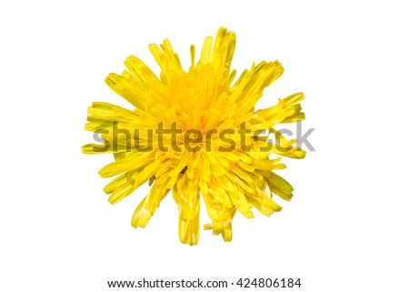 spring flower dandelion isolated on white background - stock photo