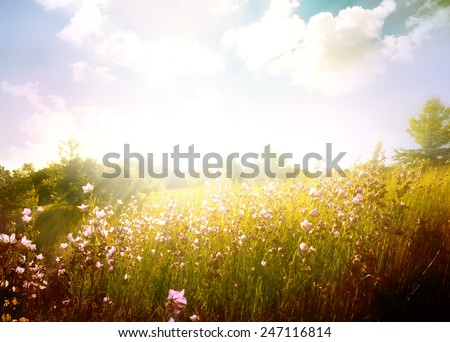 Spring flower field and blue sky. - stock photo