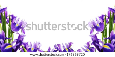 Spring flower frame made from iris - stock photo