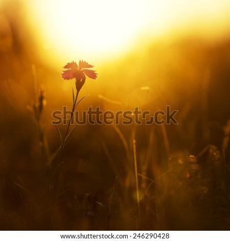 spring flower in field - stock photo