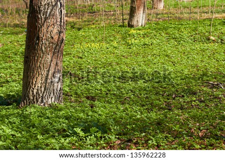 Spring flower meadow in forest - stock photo