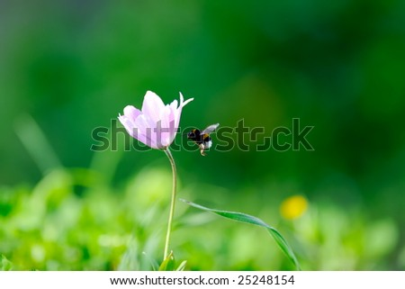 spring flower on field and bee - stock photo