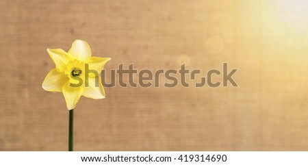 Spring flower website banner with copy space - stock photo