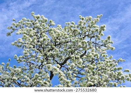 Spring flowering  - stock photo