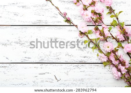 Spring flowering branch on white wooden background - stock photo