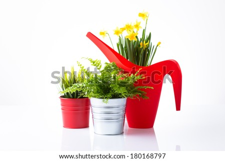 Spring flowers and a red watering can