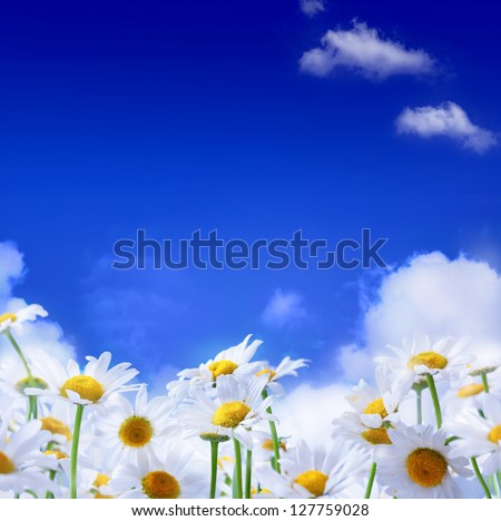 spring flowers and blue sky background - stock photo