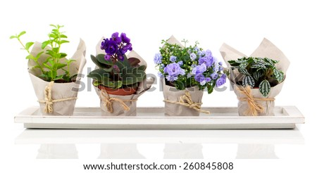 spring flowers and plants in paper packaging, isolated on white background - stock photo