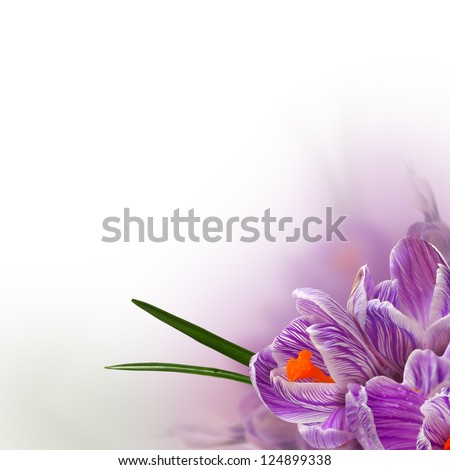 Spring flowers background - beautiful floral border - stock photo