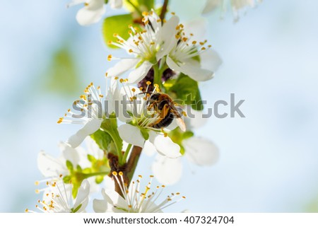 Spring flowers bloom on the trees. Macro shot of a park or garden - stock photo