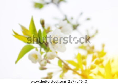 Spring flowers blooming tree branches. For a background image to insert text. Blurred background and bokeh in the background of the text, design, advertising, popular trends. Defocused. Free space. - stock photo