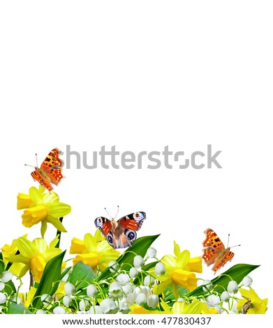 Spring flowers daffodils and lilies of the valley isolated on white background. butterfly