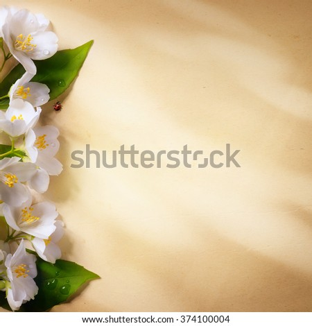 spring flowers frame  on paper background - stock photo