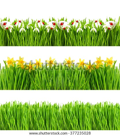 Spring flowers. Green grass with water drops. Nature objects isolated on white background. Floral banner - stock photo