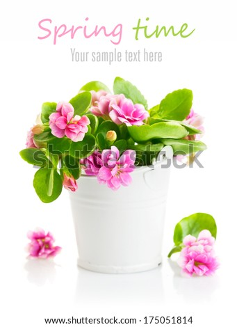 Spring flowers in bucket. Isolated on white background - stock photo