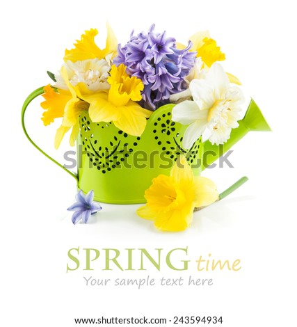 Spring flowers in green watering can. Isolated on white background - stock photo