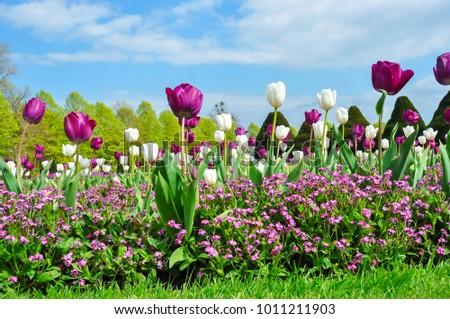 Spring flowers hampton court garden london stock photo royalty free spring flowers in hampton court garden london uk mightylinksfo