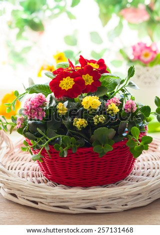 Spring flowers in red bucket - stock photo