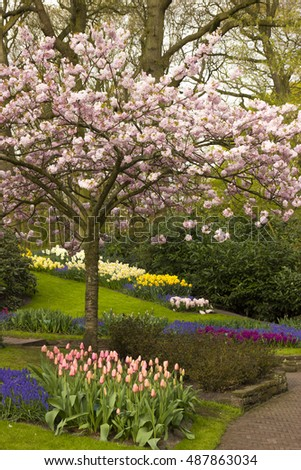Spring flowers in the Keukenhof garden, Netherlands