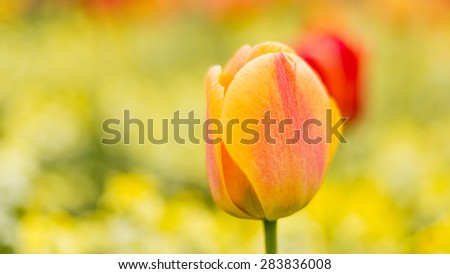Spring flowers in ultra shallow DOF bedworth in warwickshire uk