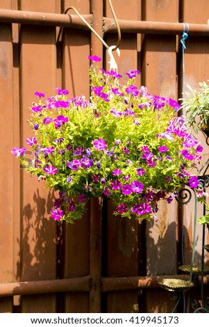 Spring flowers in white vase , purple flowers ,flowers on fence , nature ,small flowers hanged on fence,violets on fence,purple flowers,purple green,spring violet flowers,brown fence,flowers on fence,